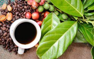cafe31_WPRL