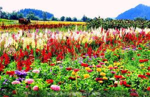 ngàn hoa